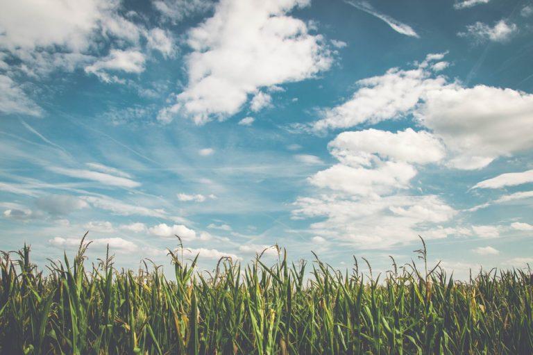 Jak należy stosować herbicydy?