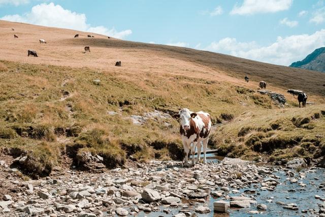 Co warto wiedzieć na temat schładzalników do mleka?
